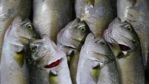 Marmara'da ağlara takılmaya başlayan lüfer balıkçıları sevindirdi
